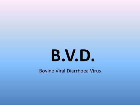 B.V.D. Bovine Viral Diarrhoea Virus. BVD Highly contagious viral infection Most infections have no clinical signs Sero-conversion, virus elimination and.