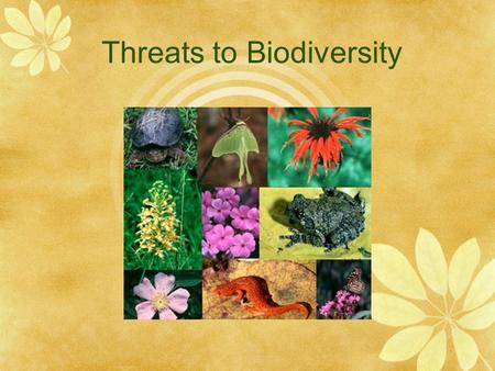 Threats to Biodiversity. Habitat Loss  Happens when either natural disasters or human activities change the ecosystem so much that many species can no.