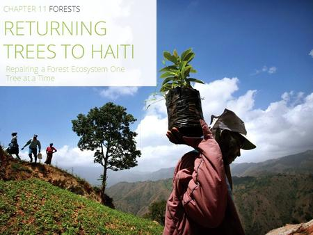 RETURNING TREES TO HAITI CHAPTER 11 FORESTS Repairing a Forest Ecosystem One Tree at a Time.