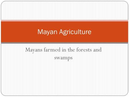 Mayans farmed in the forests and swamps Mayan Agriculture.