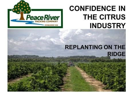 CONFIDENCE IN THE CITRUS INDUSTRY REPLANTING ON THE RIDGE.