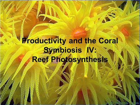 Productivity and the Coral Symbiosis IV: Reef Photosynthesis.