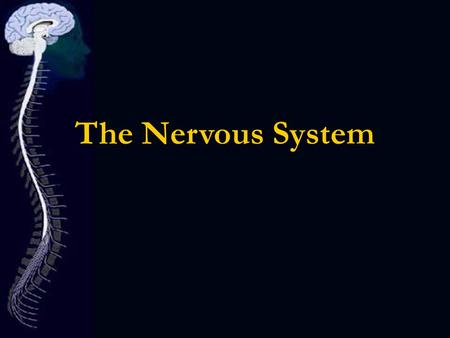 The Nervous System. Did you know? Menigitis- inflammation of the meniges caused by bacteria, viral or fungal infections. Subdural Hematoma- large blood.
