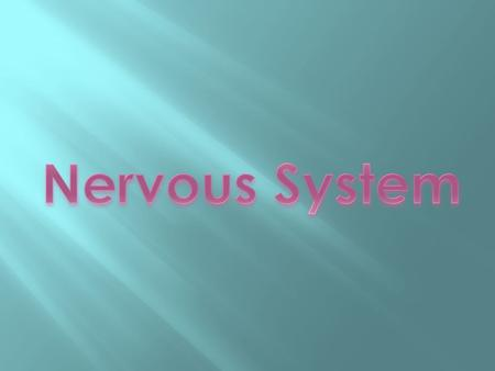 NERVOUS SYSTEM Sensory organs (receptors) capture information from the body and the environment, and then transmits it to the nervous system, which receives.