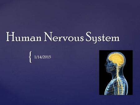{ Human Nervous System 1/14/2015. Introduction The Human Nervous System is comprised of two sections: The Central Nervous System and the Peripheral Nervous.