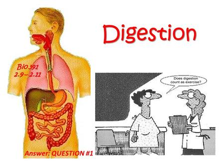 Digestion Bio 391 2.9 – 2.11 Answer: QUESTION #1.