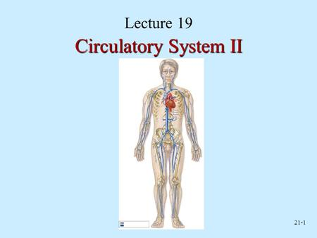 21-1 Lecture 19 Circulatory System II. 21-2 Capillary Network Capillary network made of arterial and venous capillaries Venules drain network Blood flows.