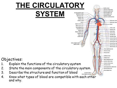 THE CIRCULATORY SYSTEM Objectives: 1.Explain the functions of the circulatory system 2.State the main components of the circulatory system. 3.Describe.