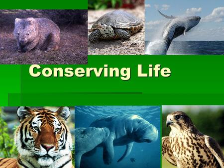 Conserving Life. Biodiversity  The variety of life in an ecosystem.