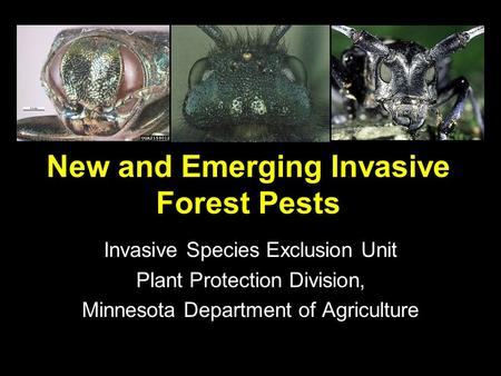 New and Emerging Invasive Forest Pests Invasive Species Exclusion Unit Plant Protection Division, Minnesota Department of Agriculture.