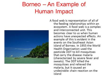 Borneo – An Example of Human Impact