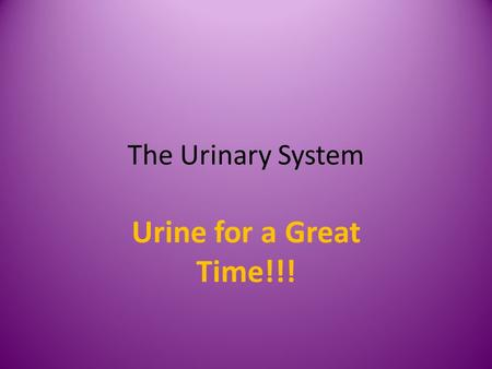 The Urinary System Urine for a Great Time!!!. Function of the Kidneys Removes salts and nitrogenous wastes Maintains normal concentration of water and.