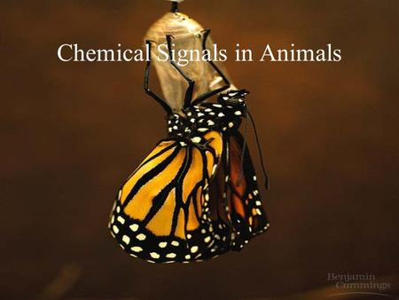 Chemical Signals in Animals. Learning Objectives (3/2/09) Differentiate between types of cellular chemical messages: autocrine, paracrine, and neuroendocrine.