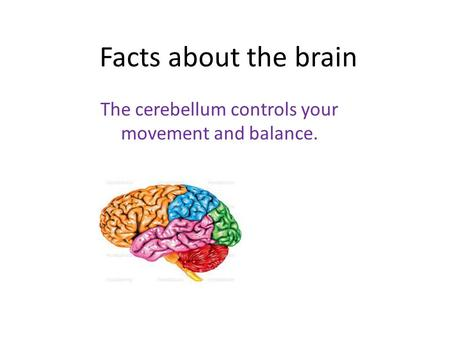 Facts about the brain The cerebellum controls your movement and balance.
