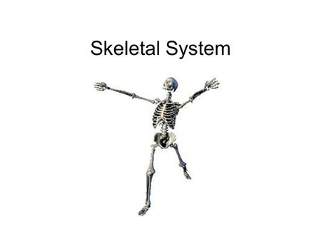 Skeletal System. 3 functions of the skeleton Movement – joints Shape/Support – keep us upright Protection e.g. the skull and other organs.
