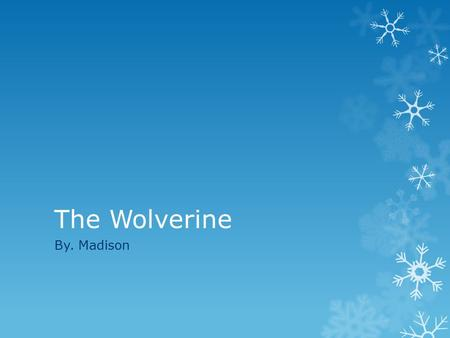 The Wolverine By. Madison. Physical Characteristics  The wolverine can be up to 31-44 inches long.  The wolverine can weigh up to 25-55 pounds.  The.