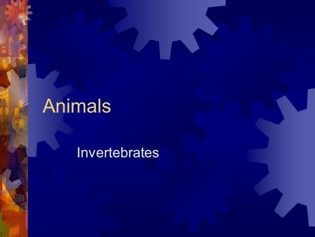 Animals Invertebrates. What are Animals?  Cannot make their own food  Have many cells  They have eukaryotic cells  Movement  Digest their food 