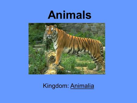Animals Kingdom: Animalia.
