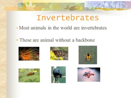 Invertebrates Most animals in the world are invertebrates These are animal without a backbone.