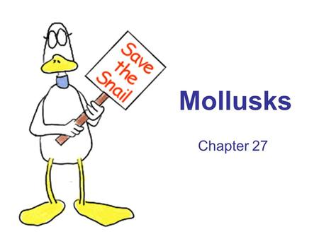 Mollusks Chapter 27. Mollusk characteristics Soft-bodied animals with an internal or external shell Trochophore: free-swimming larvae stage Body plan.