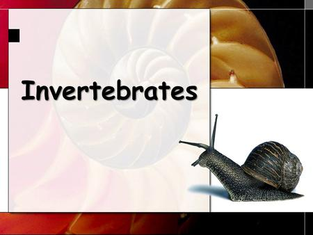 Invertebrates 1. Invertebrate Phyla Sponges Cnidarians Platyhelminthes Nematodes Mollusks Annelids Echinoderms Arthropods 2.