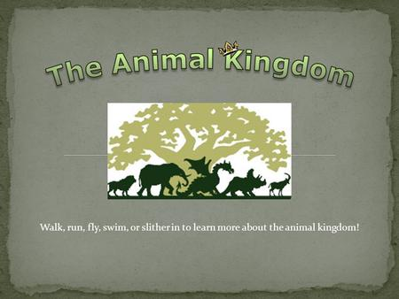 Walk, run, fly, swim, or slither in to learn more about the animal kingdom!