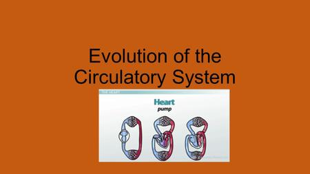 Evolution of the Circulatory System. Open vs Closed System Open Circulatory System Exists in invertebrates Insects, mollusks some crustaceans Blood vessel.