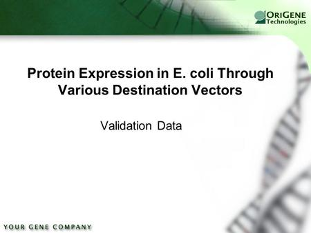 Protein Expression in E. coli Through Various Destination Vectors Validation Data.