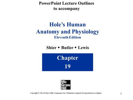 1 PowerPoint Lecture Outlines to accompany Hole's Human Anatomy and Physiology Eleventh Edition Shier  Butler  Lewis Chapter 19 Copyright © The McGraw-Hill.