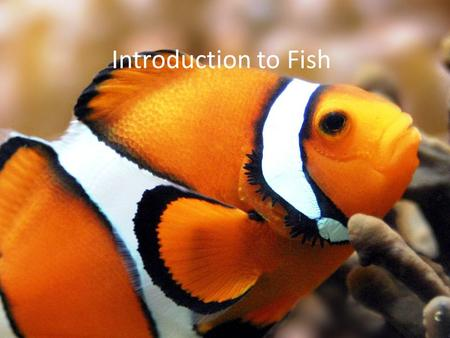 Introduction to Fish. What are Fish? Fish are aquatic vertebrates (animals with backbones) with fins for appendages. They breathe by means of gills.
