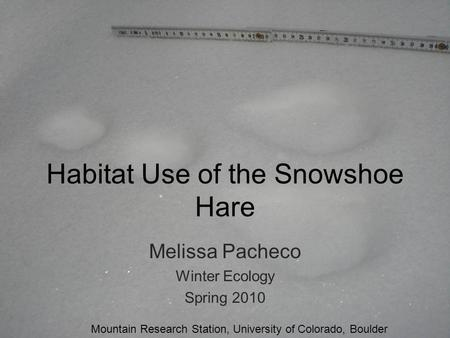 Habitat Use of the Snowshoe Hare Melissa Pacheco Winter Ecology Spring 2010 Mountain Research Station, University of Colorado, Boulder.