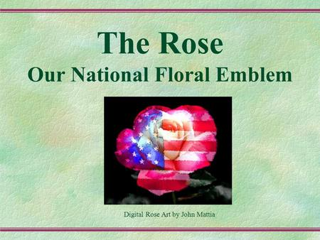 The Rose Our National Floral Emblem