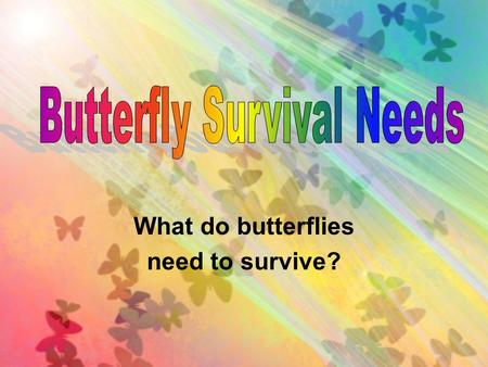 What do butterflies need to survive?