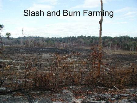 Slash and Burn Farming. In slash-and-burn agriculture, you first go through the thick tree cover with a machete and chop all the vegetation. That's the.