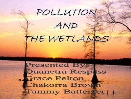 POLLUTION <strong>AND</strong> THE WETLANDS. Introduction Seventeen percent <strong>of</strong> North Carolina's 5.7 million acres are wetlands. Ninety-five percent <strong>of</strong> North Carolina's.