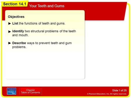 Section 14.1 Your Teeth and Gums Slide 1 of 25 Objectives List the functions of teeth and gums. Identify two structural problems of the teeth and mouth.