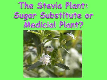 Sugar Substitute or Medicial Plant?