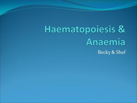 Becky & Shef. What is haematopoiesis? The production of mature blood cells.