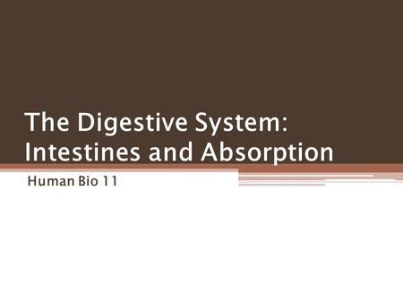 The Digestive System: Intestines and Absorption Human Bio 11.