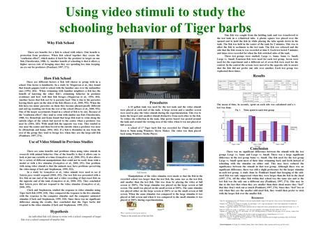 Using video stimuli to study the schooling behavior of Tiger barbs Why Fish School There are benefits for a fish to school with others. One benefit is.
