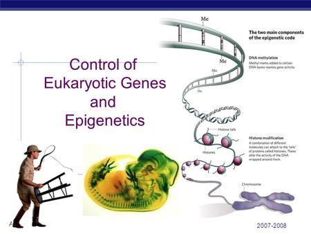2007-2008 AP Biology Control of Eukaryotic Genes and Epigenetics.