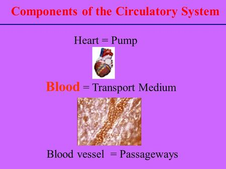 Components of the Circulatory System Heart = Pump Blood vessel = Passageways Blood = Transport Medium.