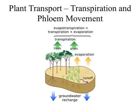 Plant Transport – Transpiration and Phloem Movement.