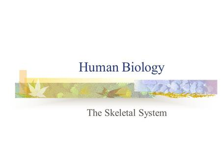 Human Biology The Skeletal System. The Skeletal System… The skeletal system is the body's living framework It consists of living material embedded in.