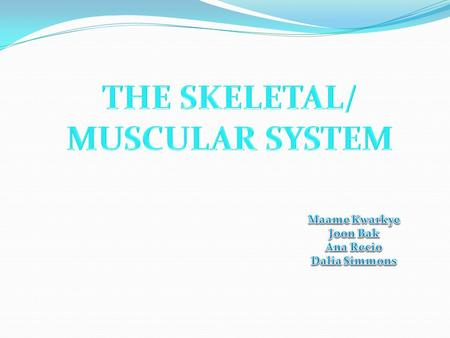 SKELETAL and MUSCULAR SYSTEM MAIN FUNCTIONS: - SUPPORT - PROTECTION - STORAGE - BLOOD CELL FORMATION The skeletal/muscular system is responsible for.