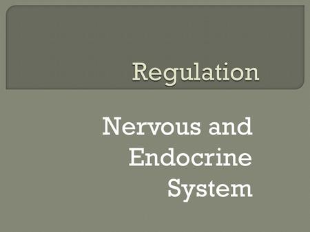 Nervous and Endocrine System.  How do humans carry out the life process, regulation?  How do the nervous and endocrine systems help to maintain homeostasis.