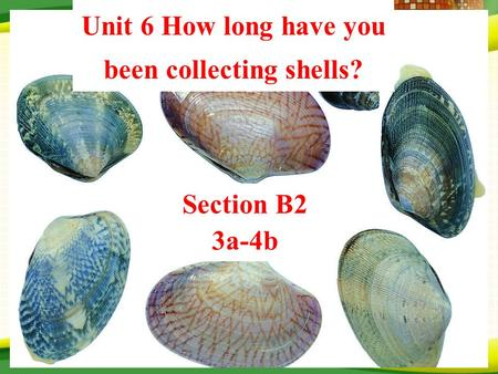 Unit 6 How long have you been collecting shells? Section B2 3a-4b.