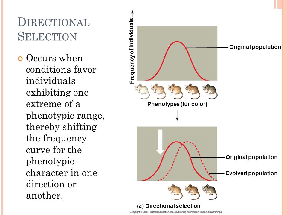 D ISRUPTIVE S ELECTION Occurs when conditions favor individuals at both extremes of a phenotypic range over individuals with intermediate phenotypes.