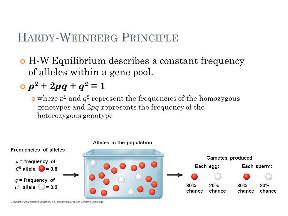 H ARDY -W EINBERG A SSUMPTIONS 1.No mutations 2. Random mating 3.