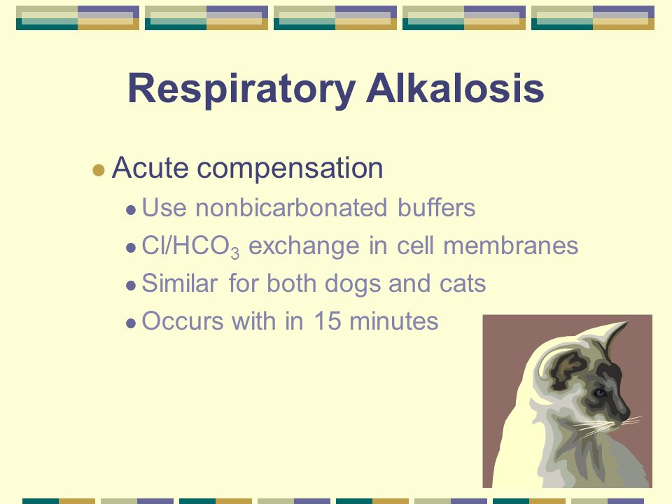 Respiratory Alkalosis Chronic compensation Dogs Renal adaptation Increase H + retention Increase HCO 3 excretion Takes 2-5 days to reach steady state Maybe a similar mechanism in cats